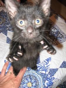 Basement cat has a fierce!